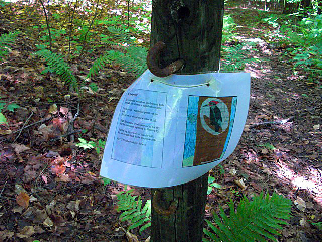 FX Shea Town Forest Poet Tree Path